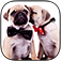 A Cute Dogs Slide Puzzle Pro - Silly Shih Tzu, Terriers and Bulldogs Posing For The Camera